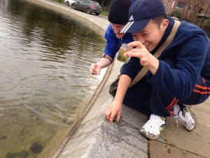 Comparing an urban pond with a forest pond – playshop # 3